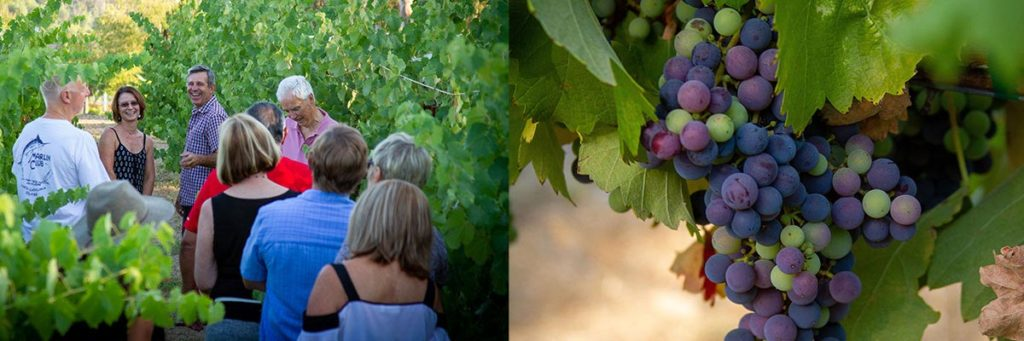 Tour the Uys Vineyard
